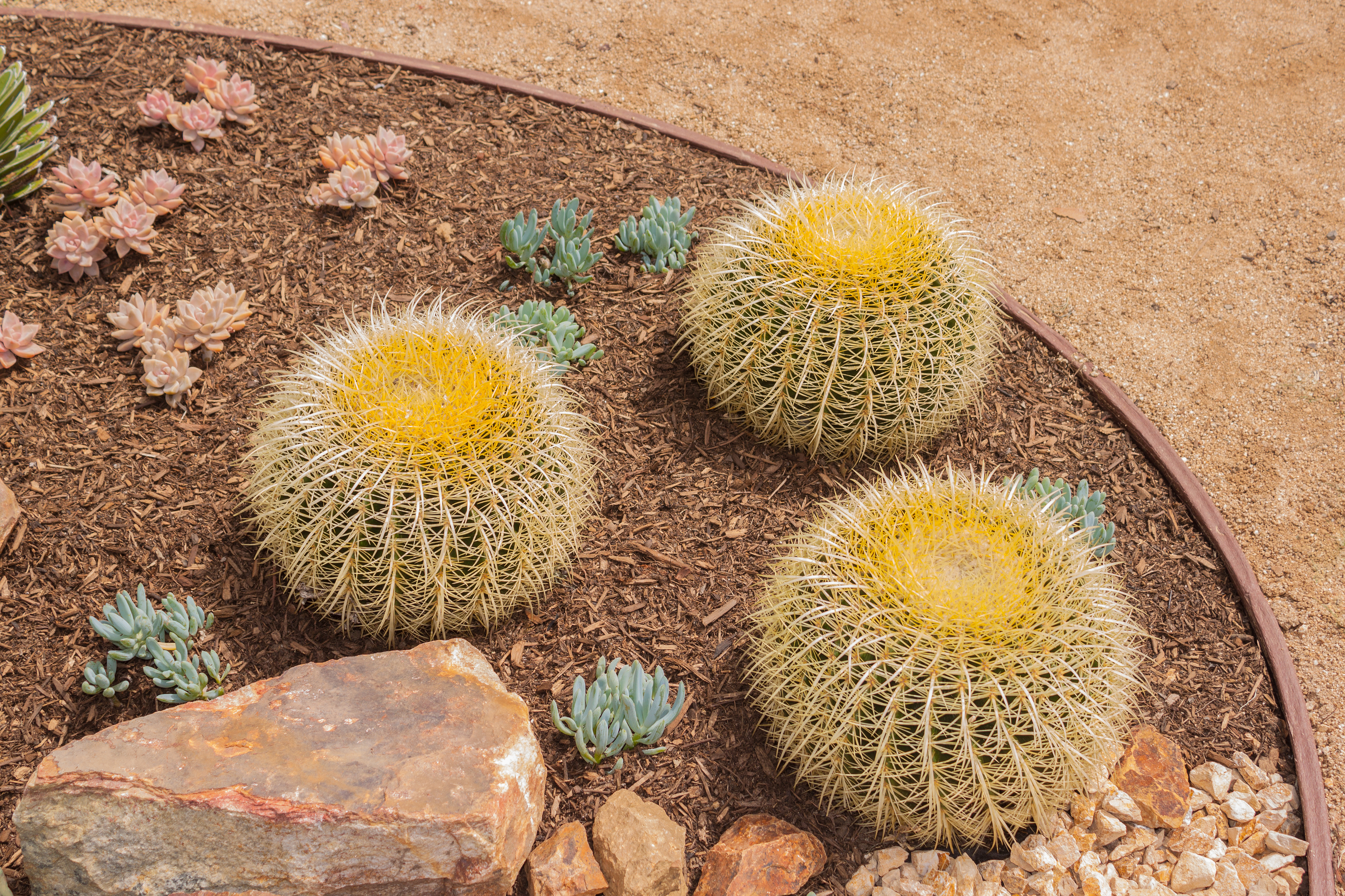Turf Factor Direct alternatives to grass lawn succulents
